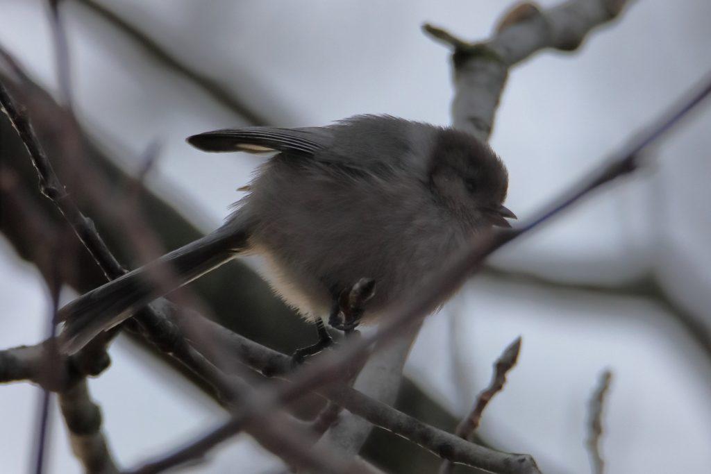 Bird Photos 68