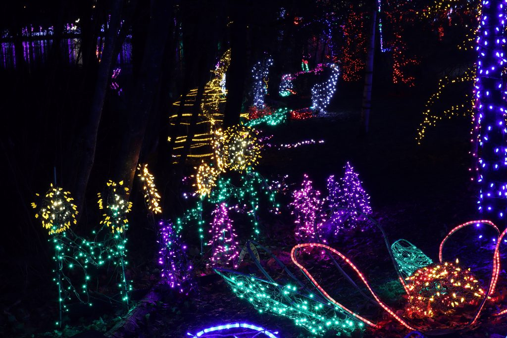 Lights at Lafarge Lake - Coquitlam 9