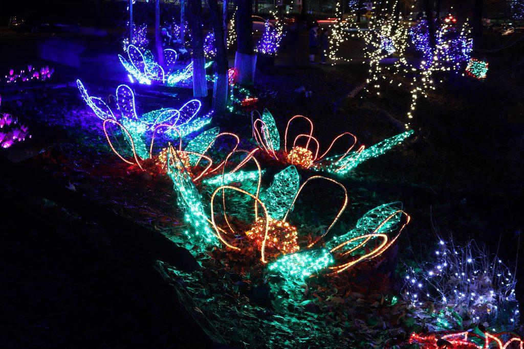 Lights at Lafarge Lake - Coquitlam 18