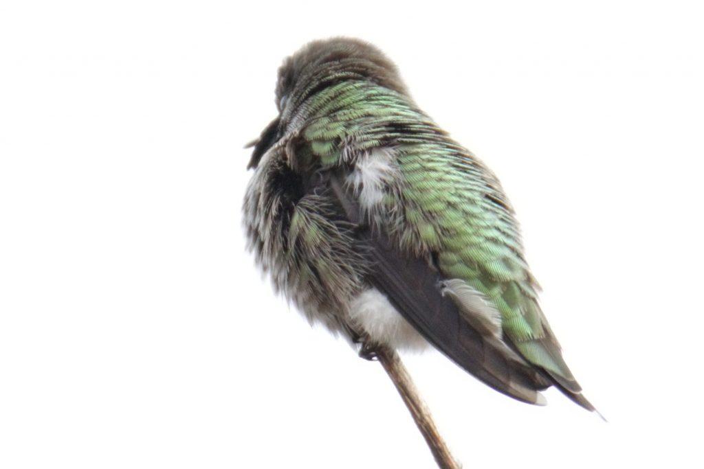 Bird Photos 28