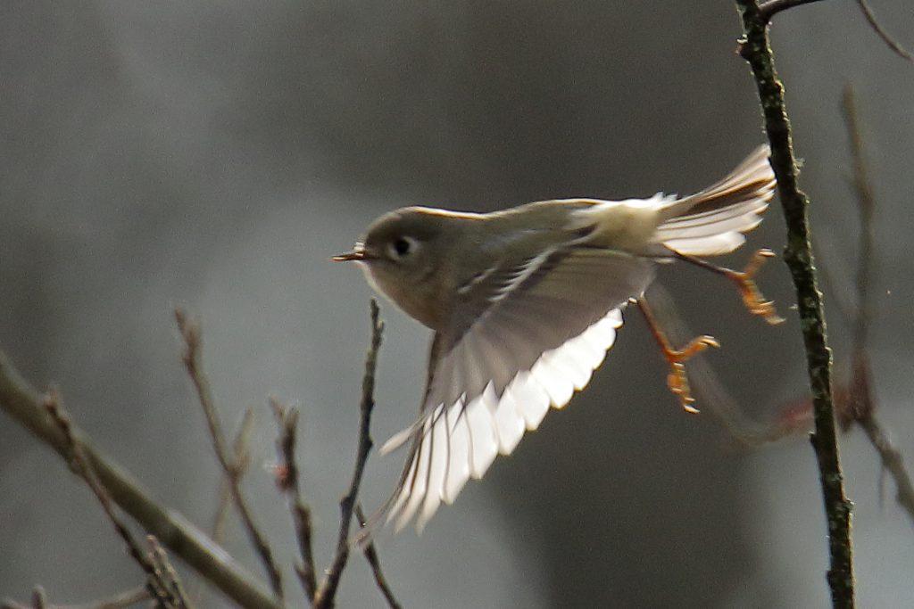 Bird Photos 71