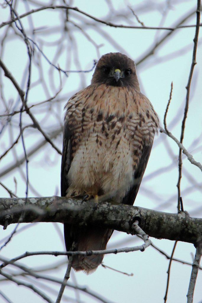 Hawks 6