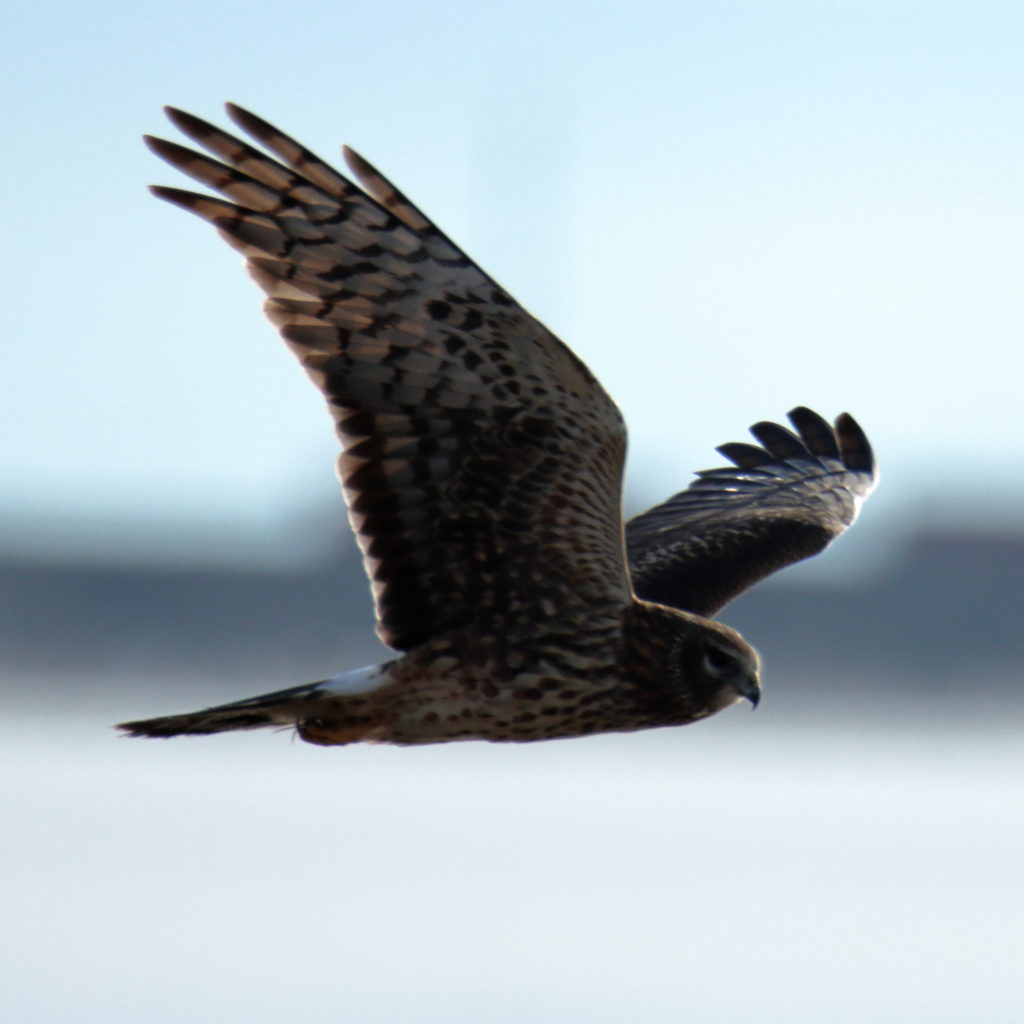Hawks 10