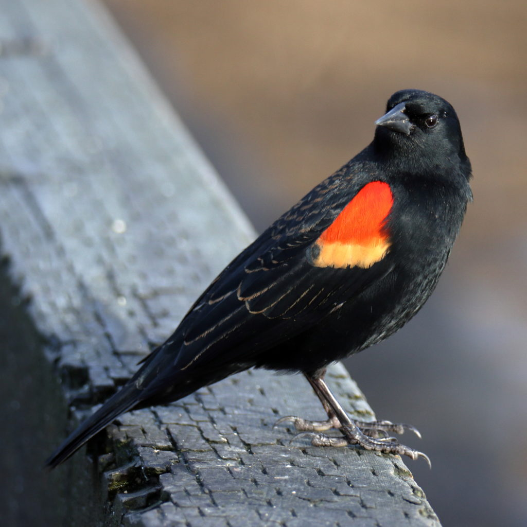 Bird Photos 6