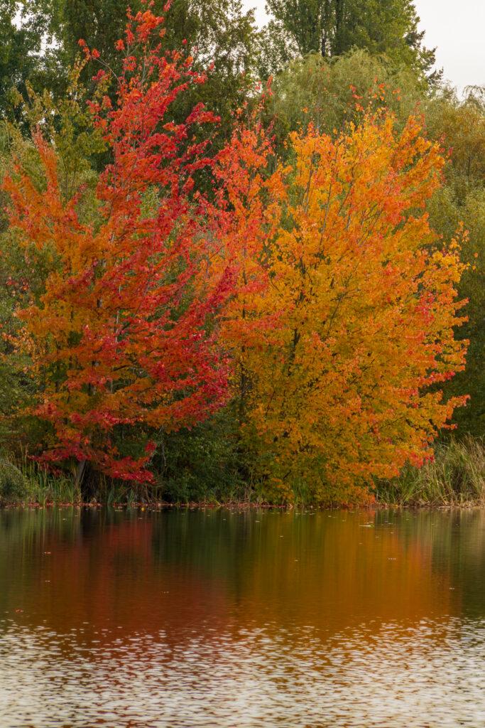 Fall colors 30